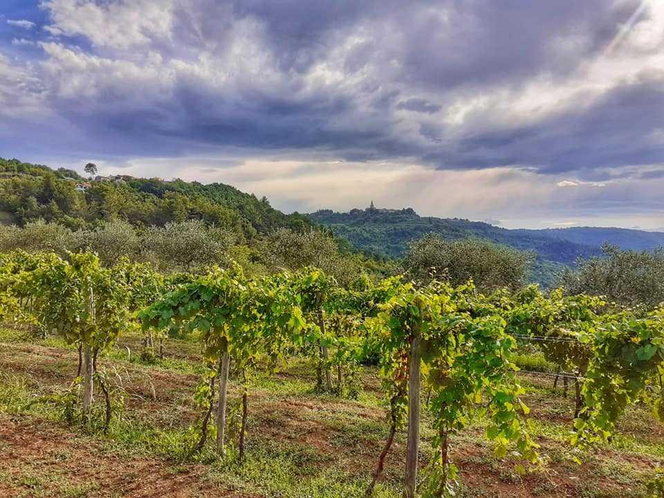 Grožnjan Završje Istria – trasa rowerowa 40 km