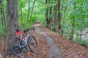 szlak rowerowy las